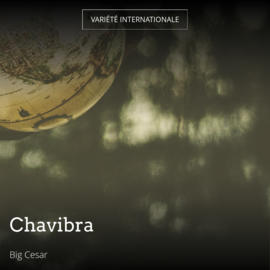 Chavibra