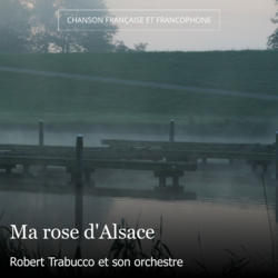 Ma rose d'Alsace