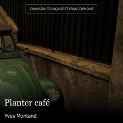 Planter café